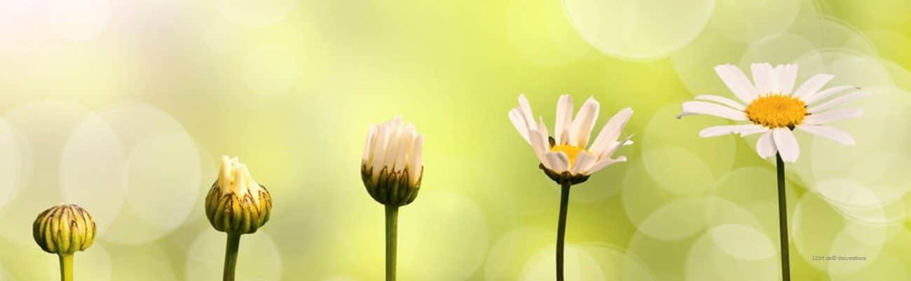 Psychologische Beratung – Psychotherapie – Blumen